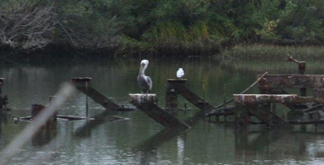 Pelican lagon