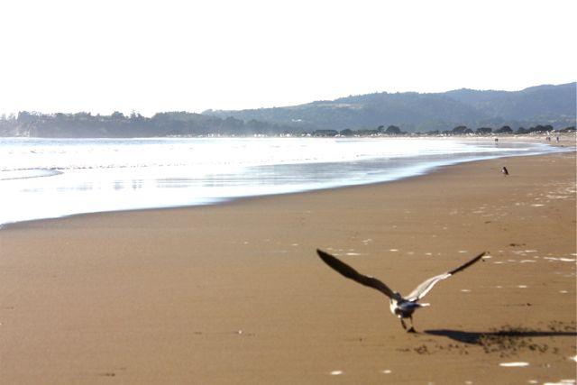 Seagull takes flight