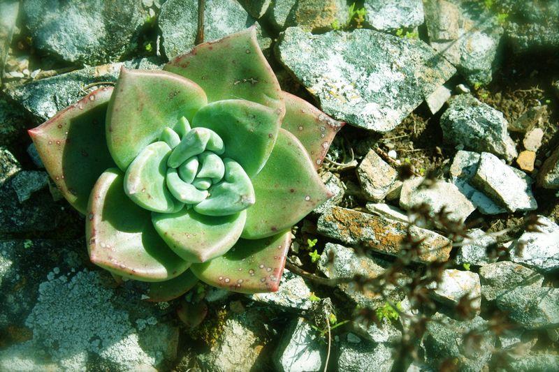 Succulent tint