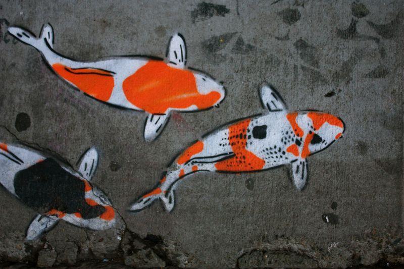 6 fishies