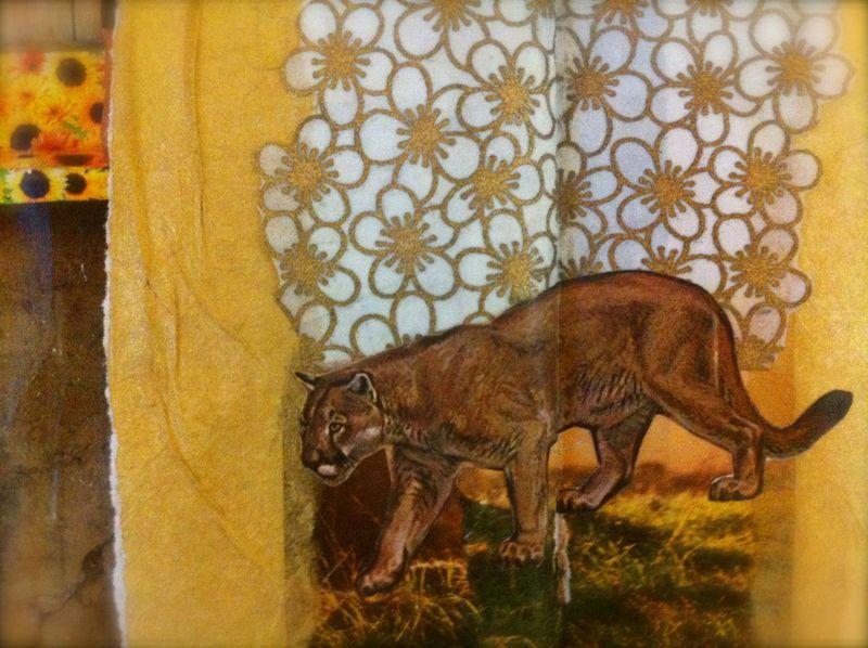 Cougar close