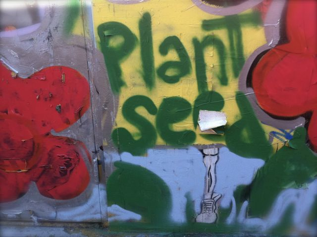 Plant seed dull